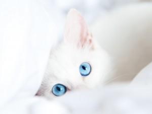 white_kitten